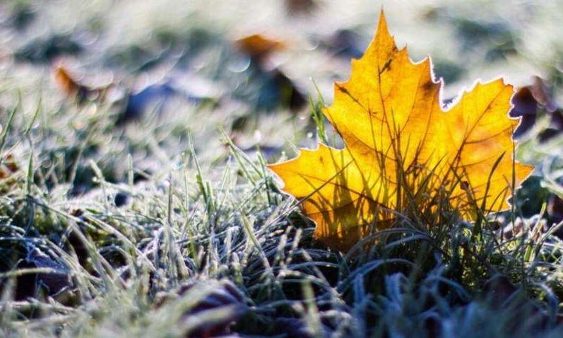Украину накроют ночные заморозки – названы области